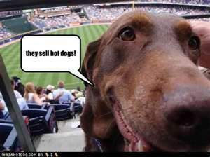 dog at baseball stadium