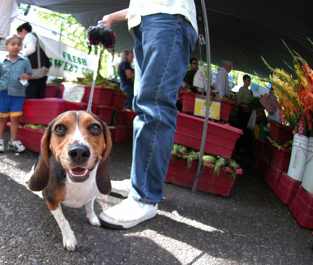 dog at farmers market