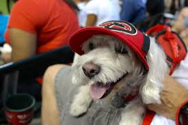 dog at chase field