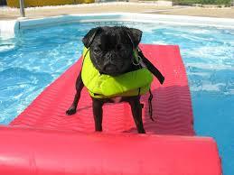 dog at resort