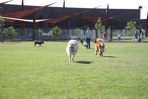 scottsdale dog park