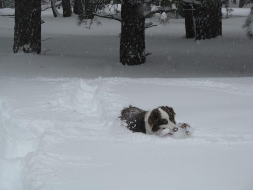 emma the dog playing in snow