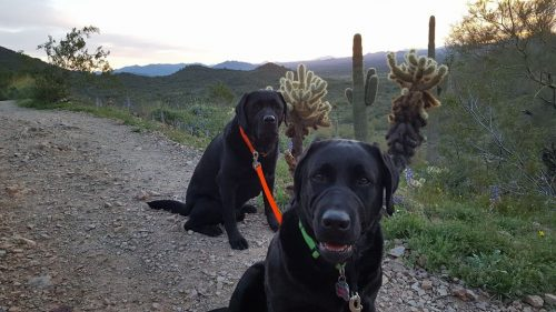 hiking with dogs in phoenix