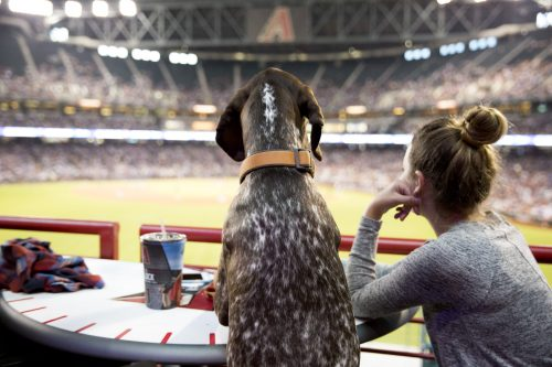 dog days at Arizona Diamondbacks baseball in Phoenix