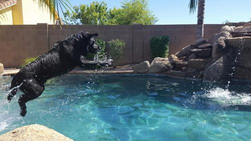 dogs enjoying swimming pool in phoenix