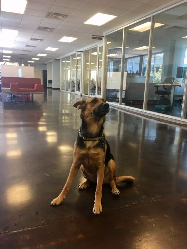 take your dog to work in central phoenix
