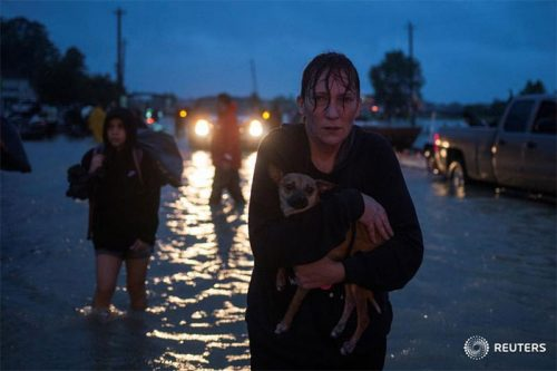 dogs hurt by Texas floods