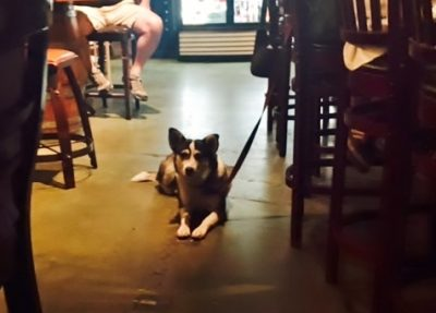 dog in bar, Flagstaff AZ