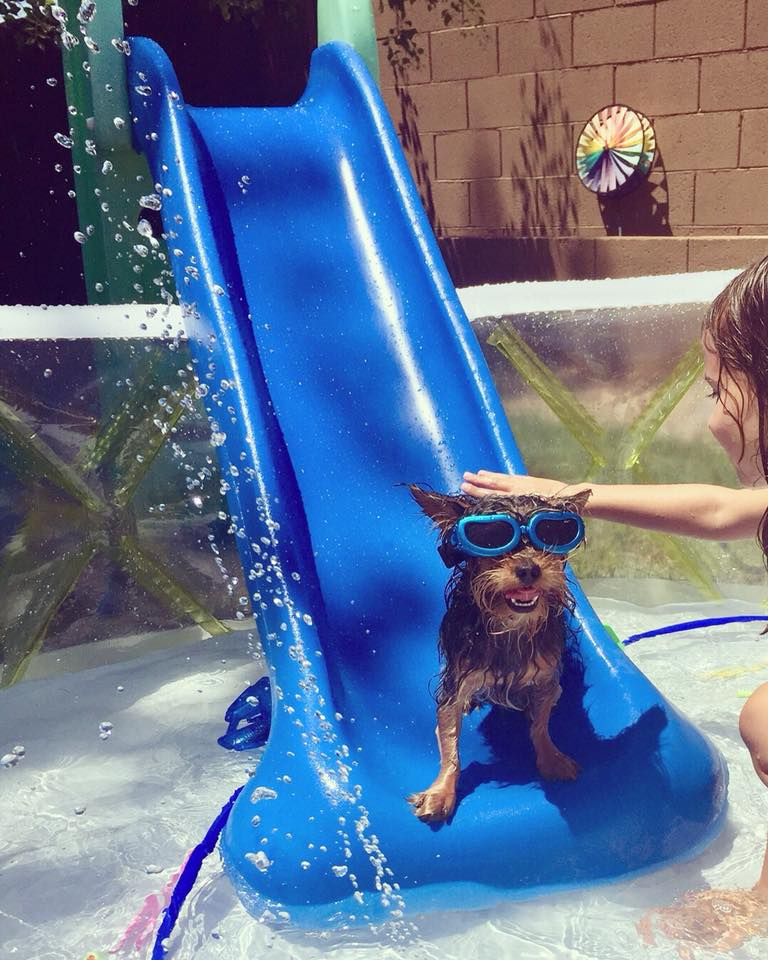 how dogs keep cool in Phoenix summers