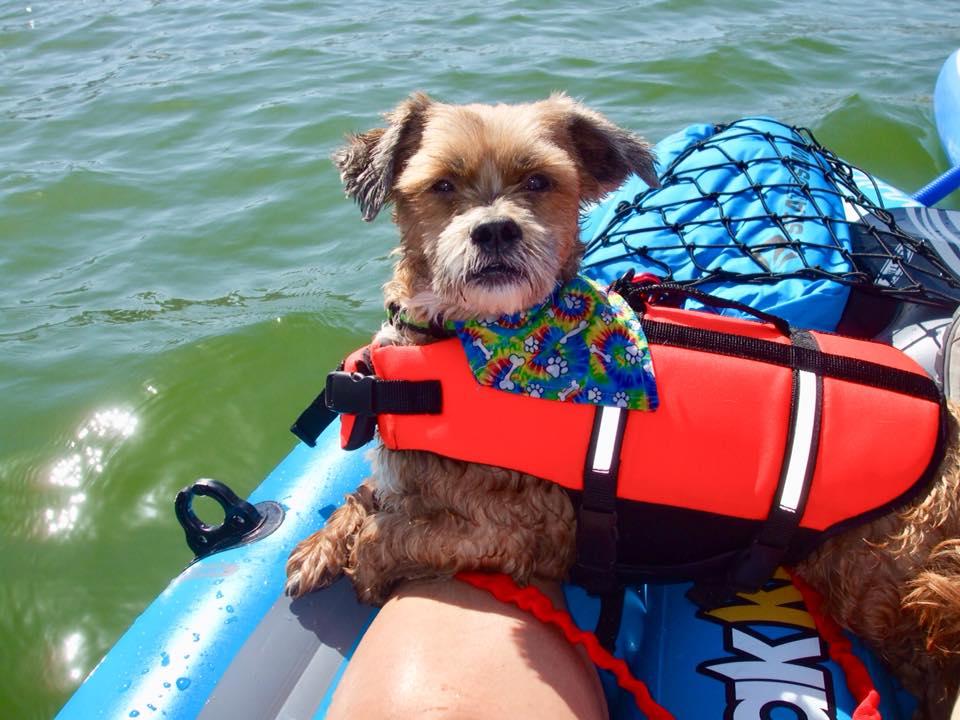 dogs kayaking in phoenix summer