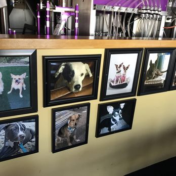 Dog-friendly: Uncle Bears in Chandler