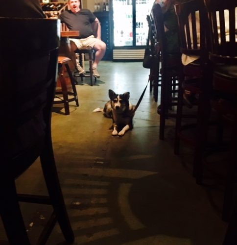 dog in flagstaff bar